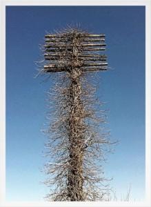 texas-telephone-poleweb